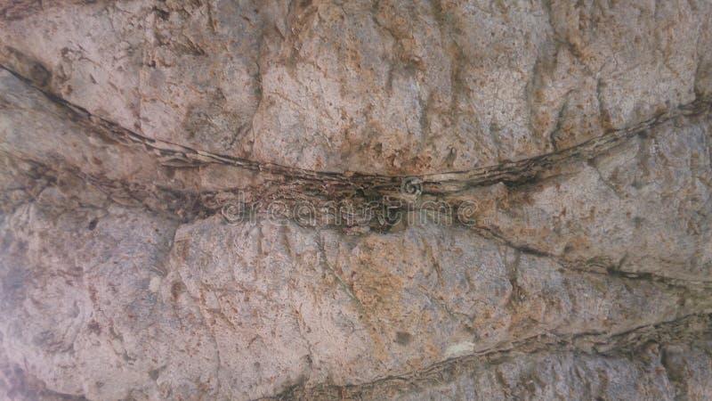 棕榈树纹理样式 库存照片