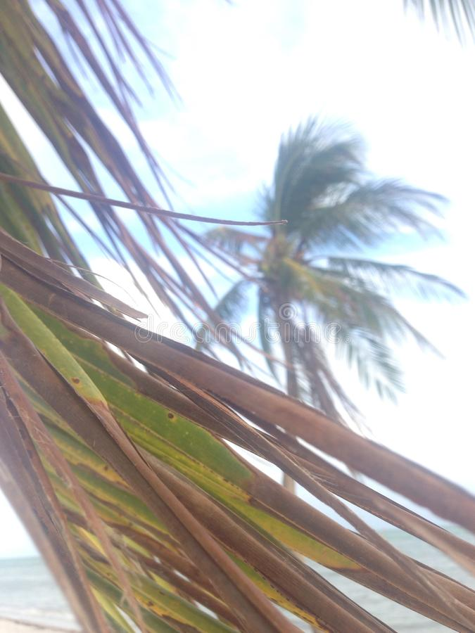 棕榈树细节 免版税库存照片