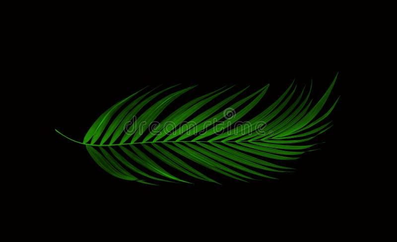 棕榈树绿色叶子在黑色的 皇族释放例证