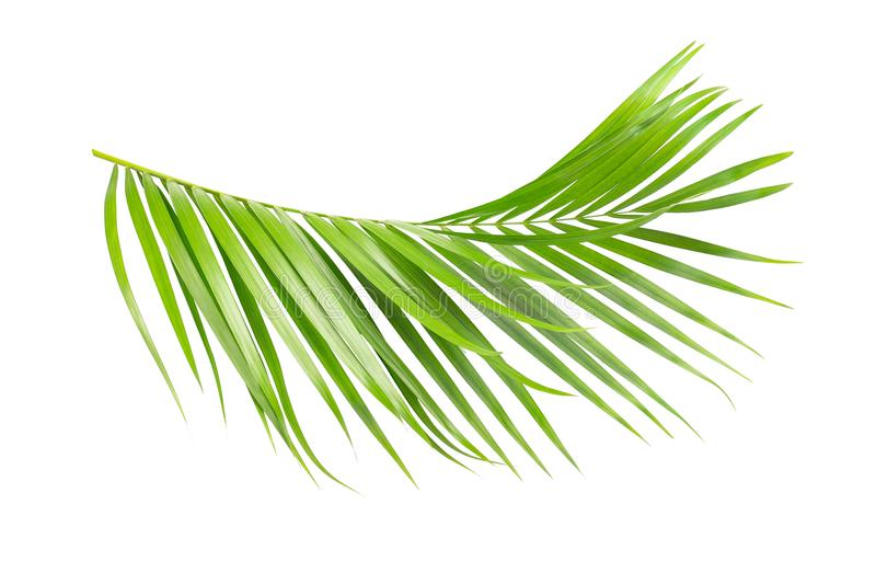 棕榈树绿色叶子  库存例证