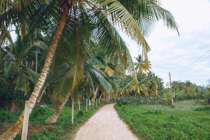 棕榈树美丽的景色沿道路, mirissa的, 图库摄影