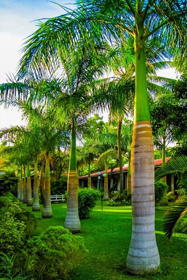 棕榈树胡同在一个热带海岛上的 库存图片
