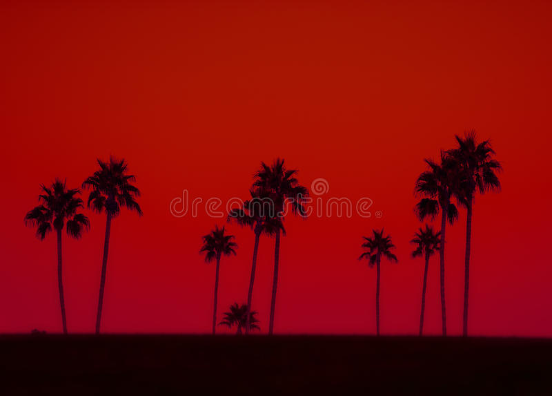 棕榈树艺术照片在剪影的反对红色天空 库存图片