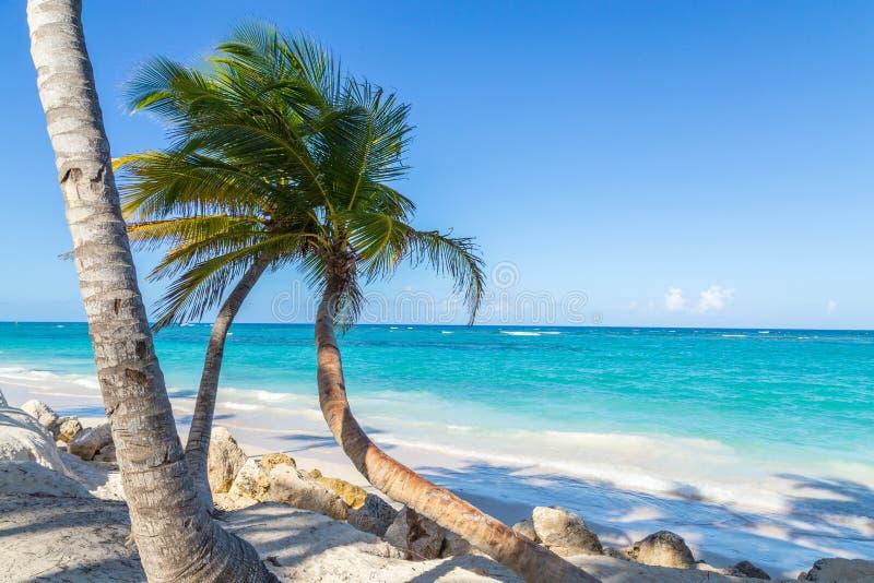 棕榈树蓬塔Cana Bavaro海滩多米尼加共和国 库存照片
