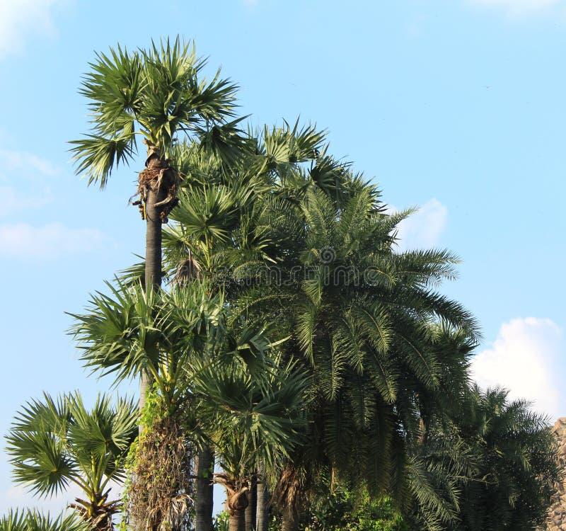 棕榈树行热带风景  免版税库存照片