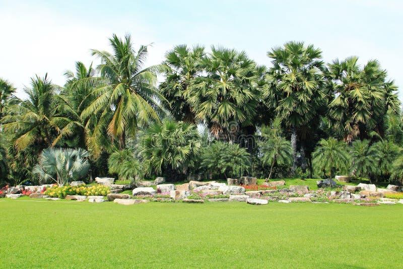 棕榈树视图 库存图片