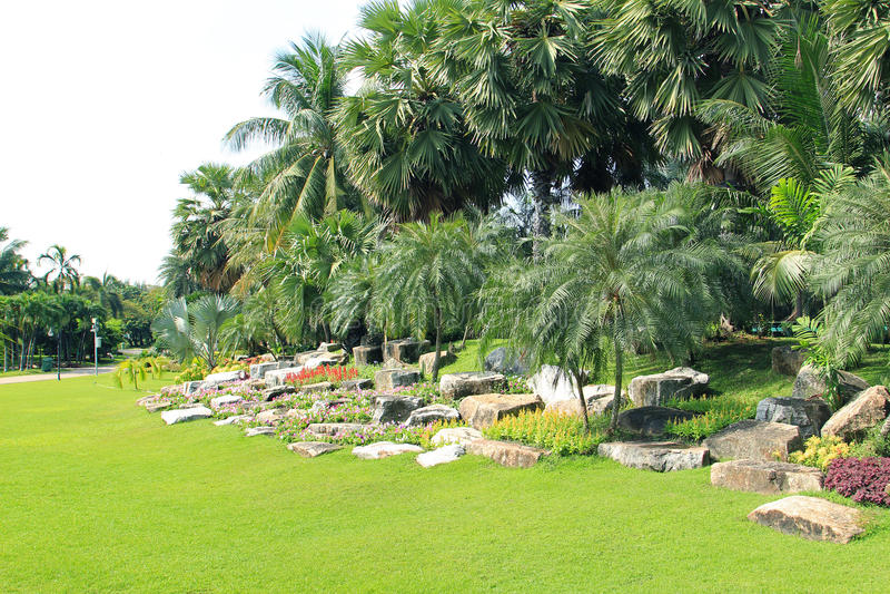 棕榈树视图 免版税图库摄影