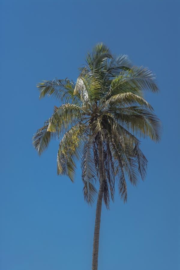 棕榈树详述的看法在Mussulo,罗安达,安哥拉海岛上的  免版税图库摄影