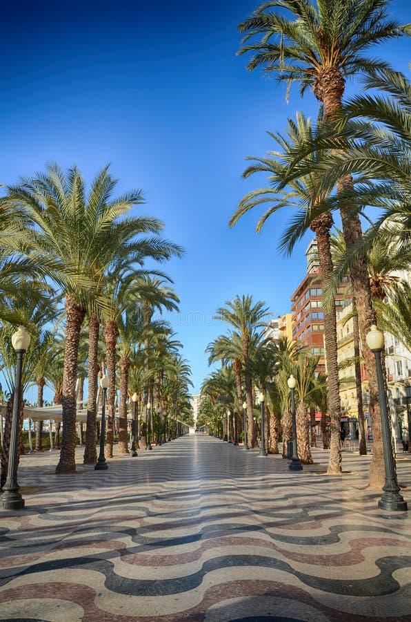 棕榈树阿利坎特,西班牙胡同  库存图片