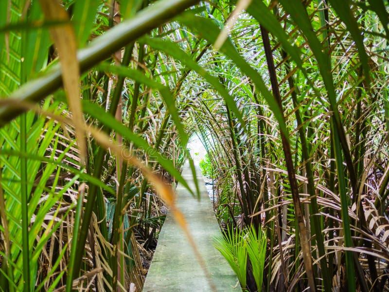 棕榈树隧道,自然走廊 库存照片