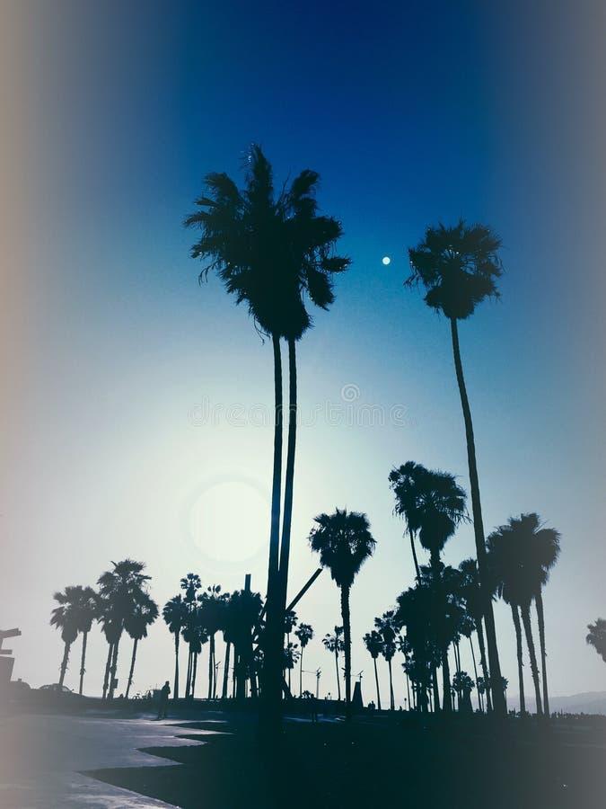棕榈树风格化剪影照片在威尼斯海滩美国的晚上 免版税图库摄影