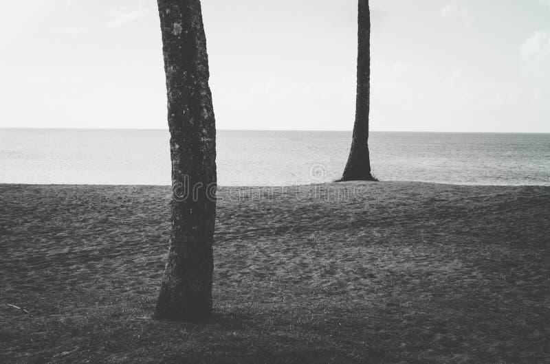 棕榈树,在檀香山,夏威夷,美国附近铺沙海洋和天空 免版税图库摄影