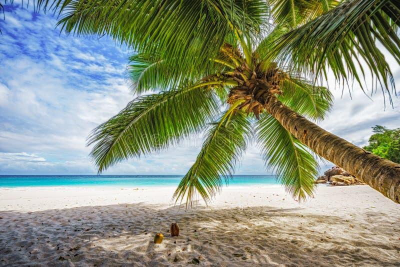 棕榈树,白色沙子,在热带海滩,塞舌尔的8天堂的绿松石水 库存照片