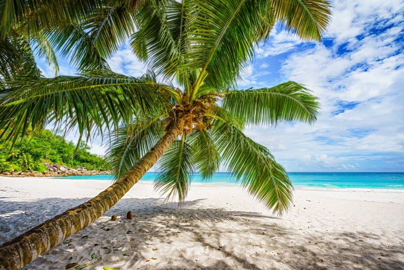 棕榈树,白色沙子,在热带海滩,塞舌尔的3天堂的绿松石水 库存图片