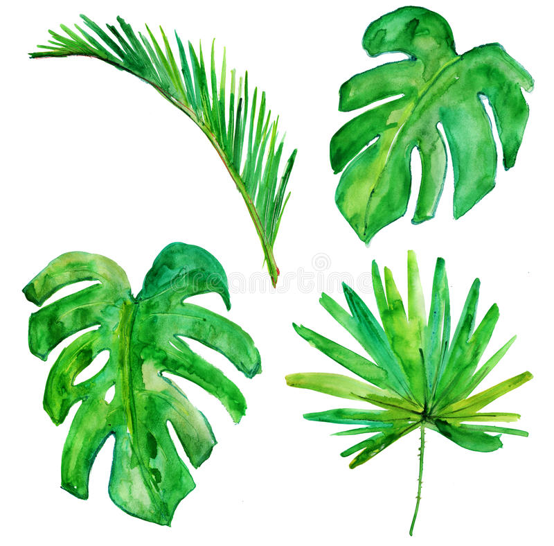 棕榈树水彩原始的绘画 水彩 皇族释放例证