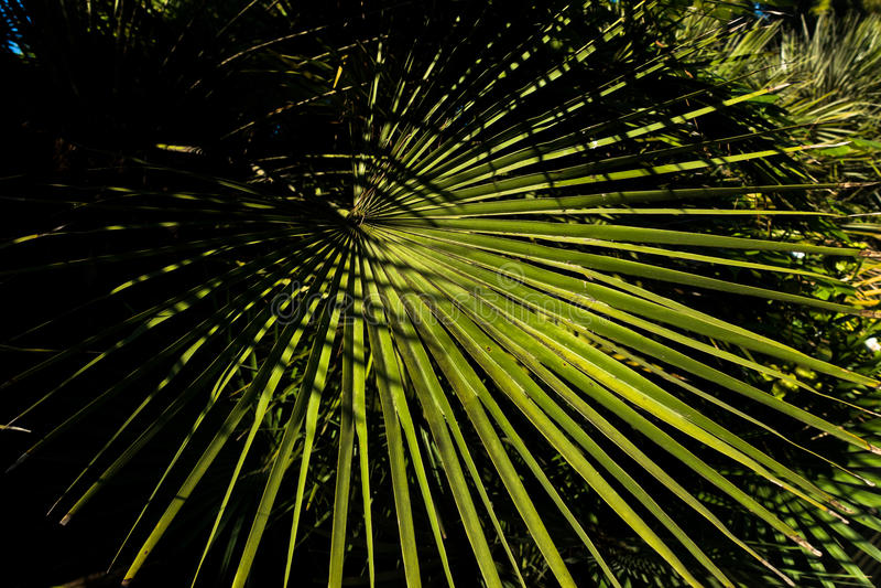 棕榈树细节在庭院离开在卡利亚里,撒丁岛 免版税图库摄影