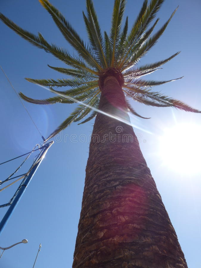 棕榈树Ovalle,智利 免版税图库摄影