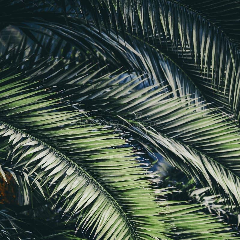棕榈植物叶子生态 免版税库存图片
