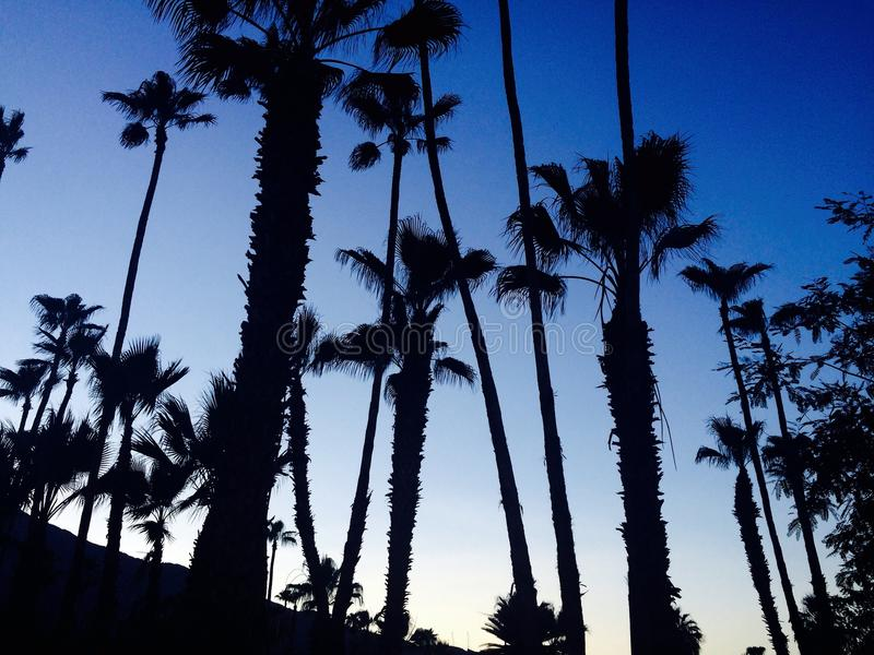 棕榈泉日落 库存图片