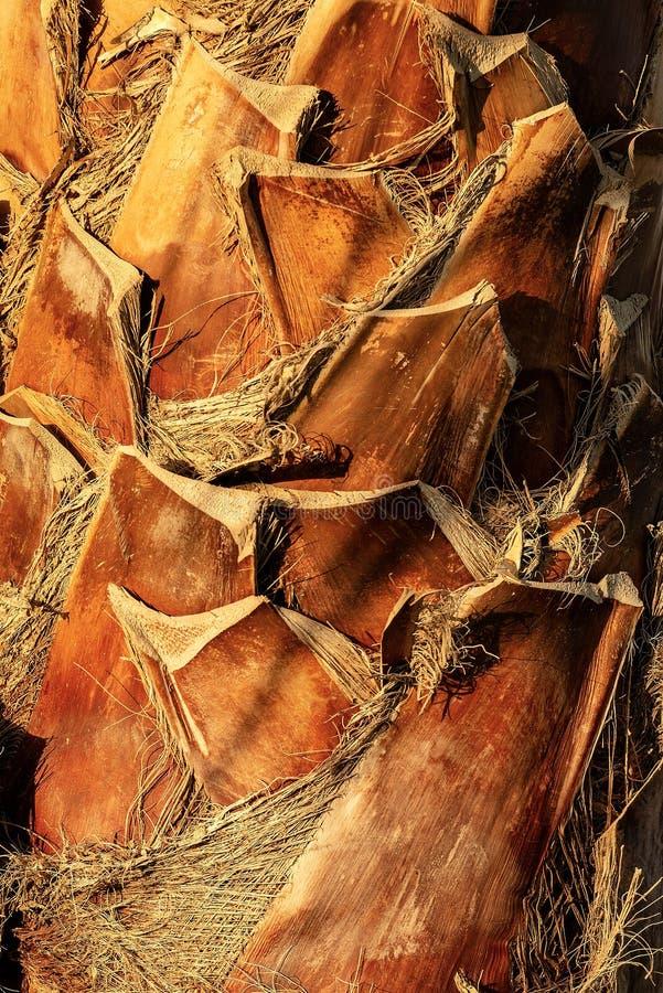 棕榈的树干的极端特写镜头 免版税库存图片