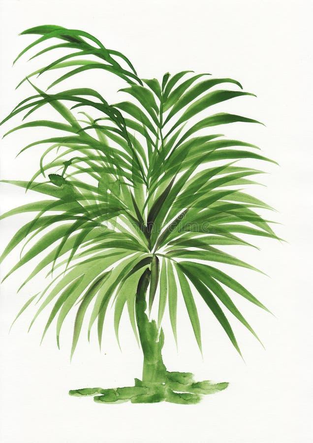 棕榈竹子水彩绘画  皇族释放例证