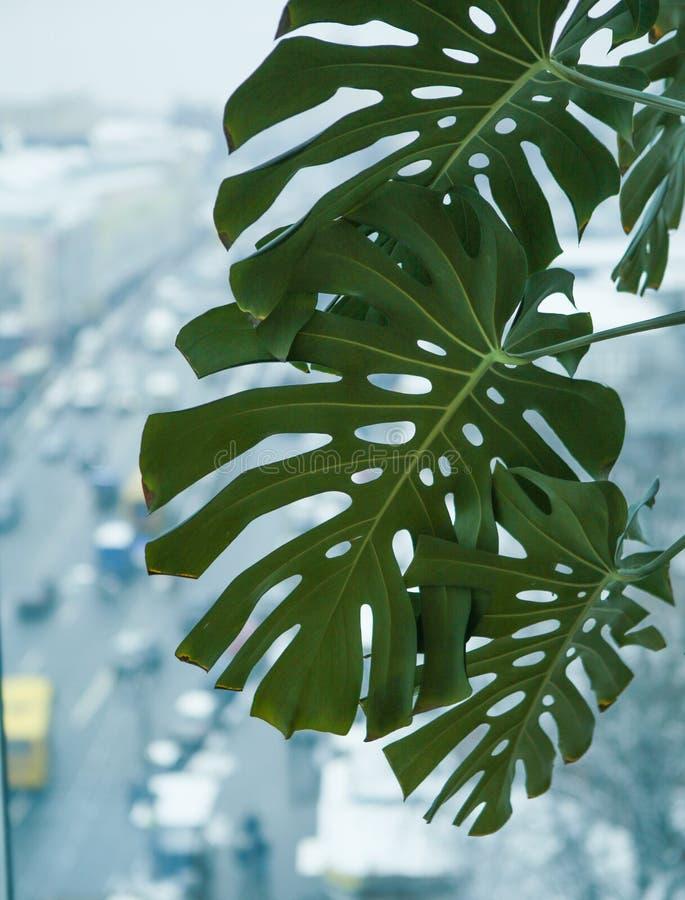 棕榈绿色留下办公楼窗口 库存照片