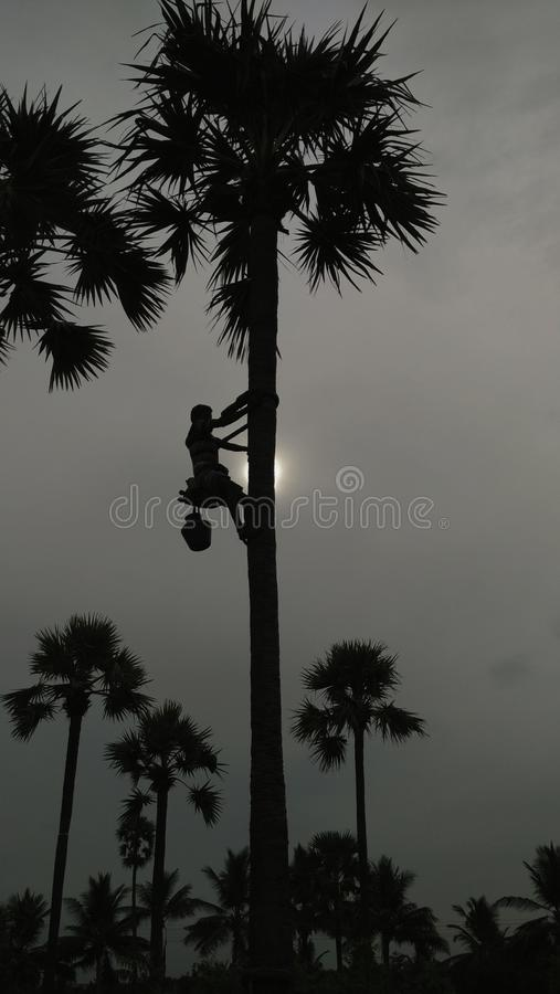 棕榈登山人 免版税库存图片