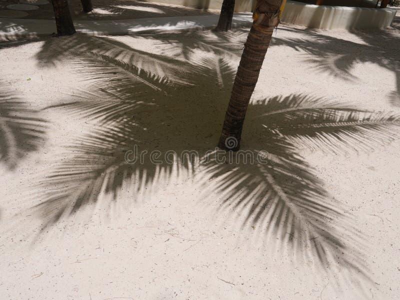 棕榈阴影沙子 库存图片