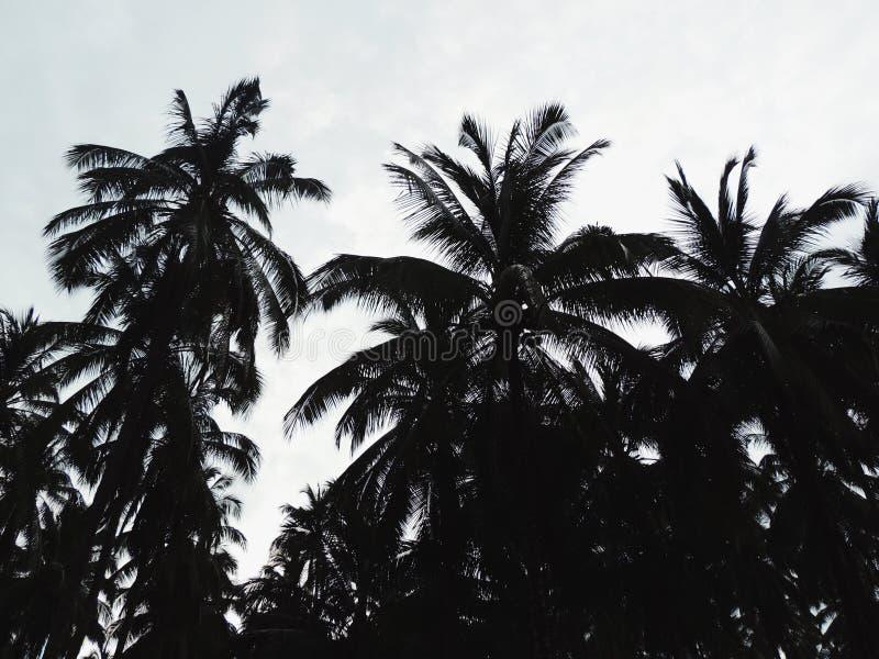 棕榈 图库摄影