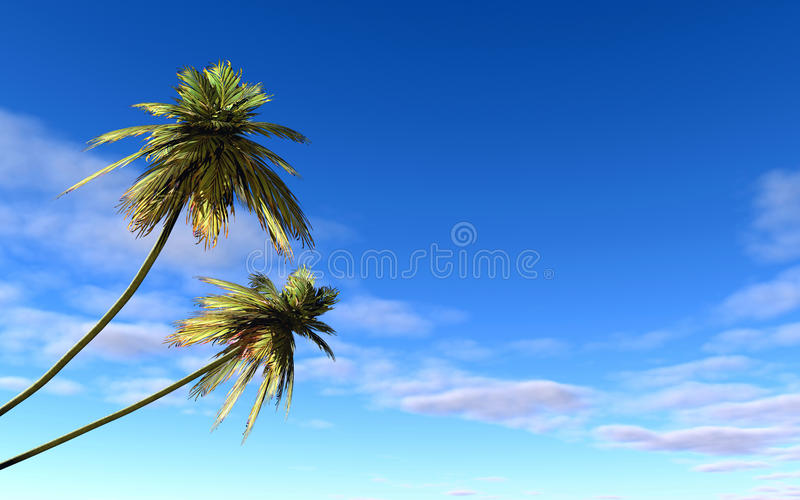 棕榈 向量例证