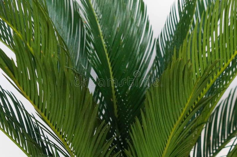 棕榈 免版税库存图片