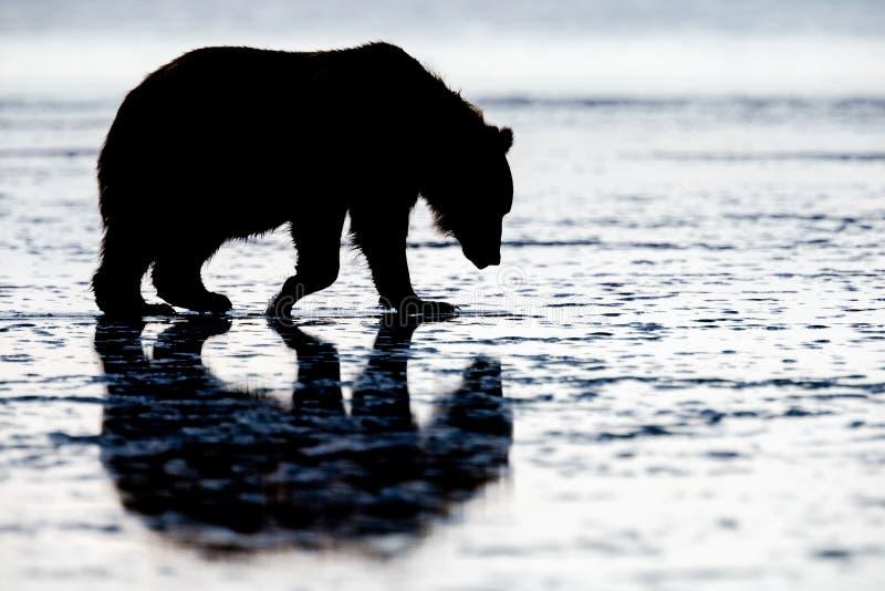 棕熊剪影,湖克拉克国家公园,阿拉斯加 库存图片