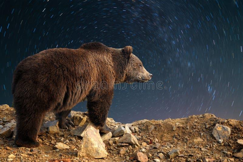 棕熊和夜空与星 库存照片