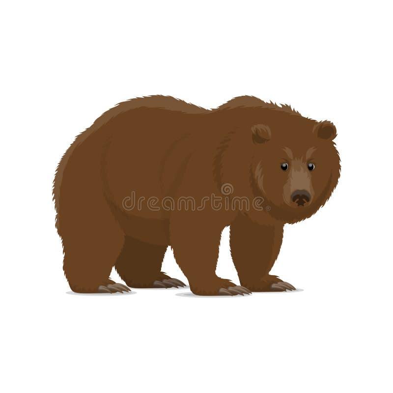棕熊或狂放的掠食性动物北美灰熊动物象  皇族释放例证
