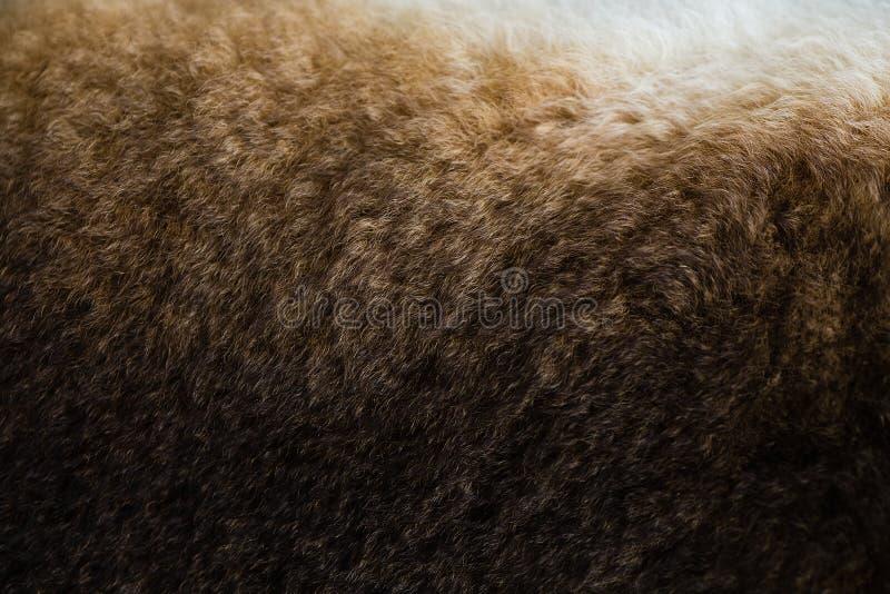 棕色兔子毛皮纹理  免版税库存照片