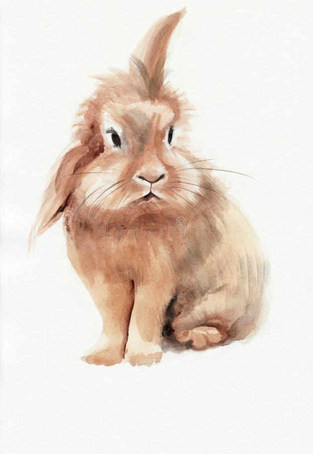 棕色兔子 库存例证