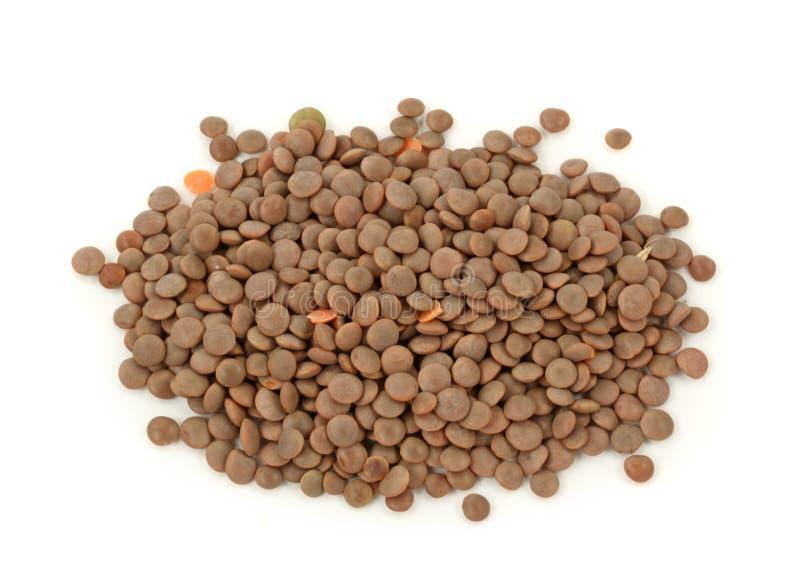 棕色扁豆 免版税库存图片