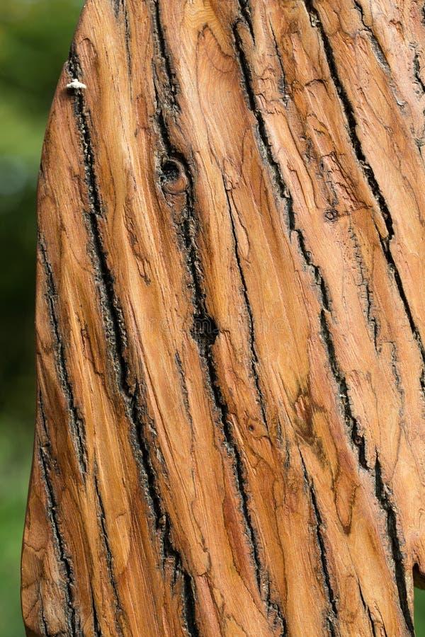 棕色树皮 库存照片