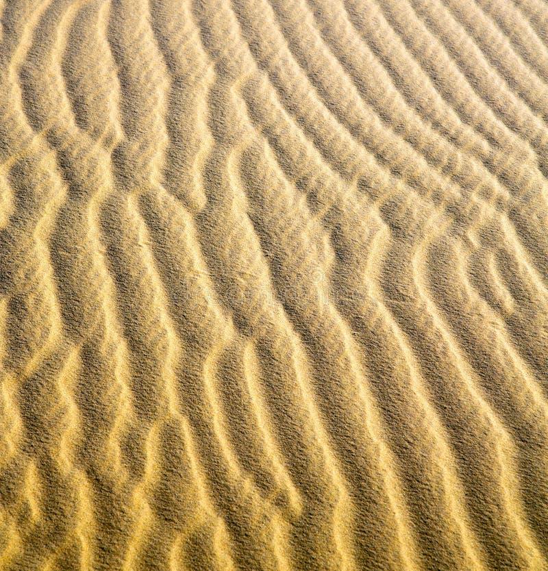 棕色沙子讨债者e在撒哈拉大沙漠摩洛哥沙漠 免版税图库摄影