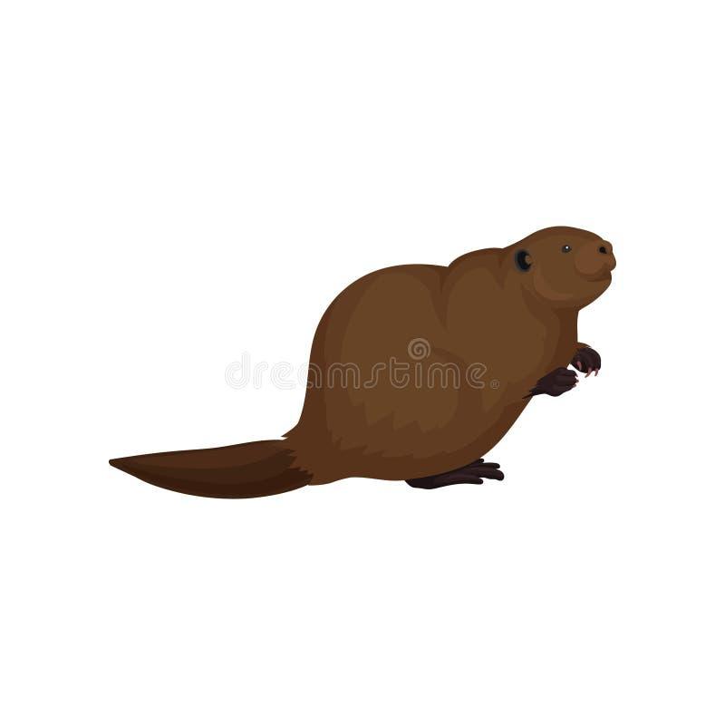 棕色海狸平的传染媒介象  与宽广的尾巴、小耳朵和野生生物题材的大森林啮齿目动物 书的元素 库存例证