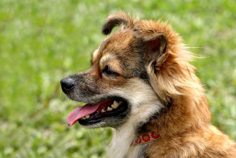 棕色狗白色 库存照片