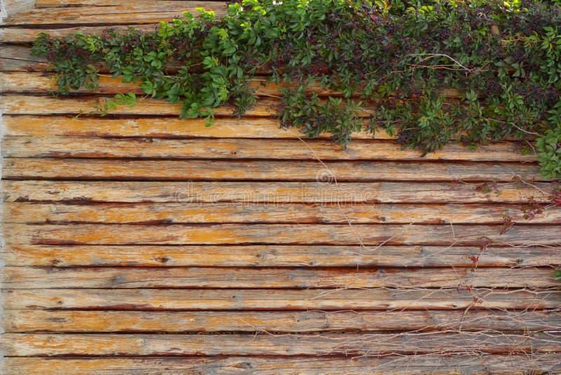 棕色自然木板条背景用葡萄 库存图片
