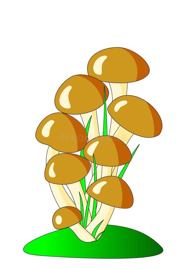 棕色蘑菇 库存例证
