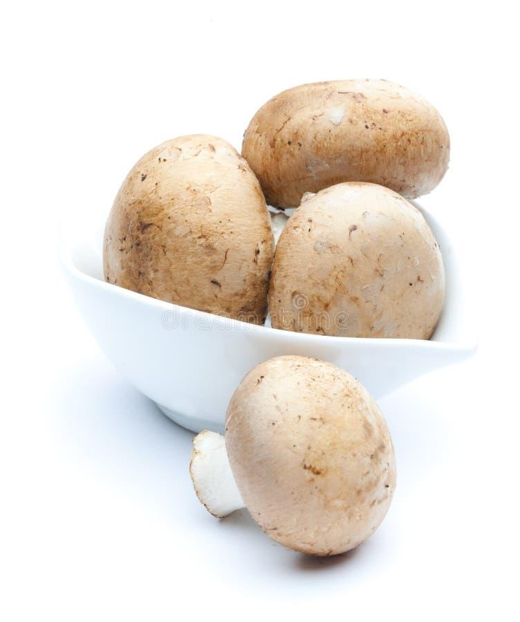 棕色蘑菇 免版税库存图片