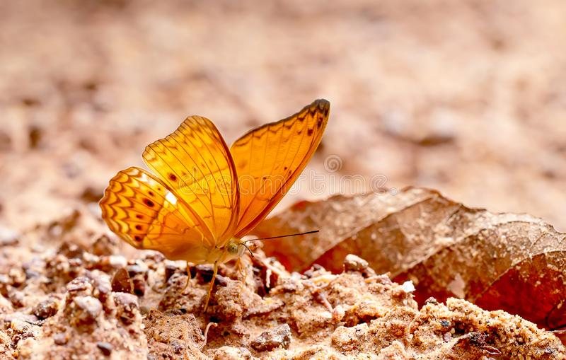 棕色蝴蝶逗留接近的看法在盐沼的和采取从土壤的矿物在与太阳光的白天在森林附近 库存图片