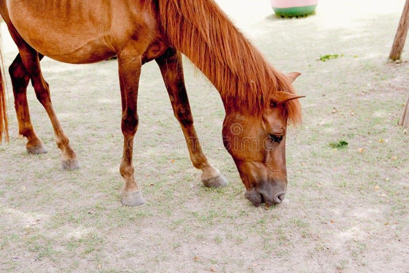 棕色马的特写镜头眼睛 库存图片
