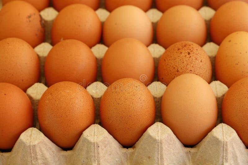 棕色鸡鸡蛋的关闭在盘子纸盒 库存图片