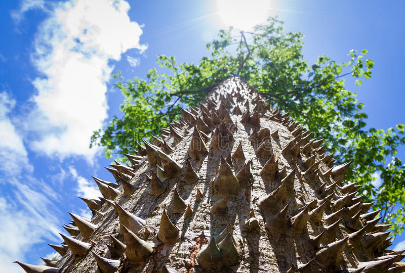 棘手的树干 免版税库存照片
