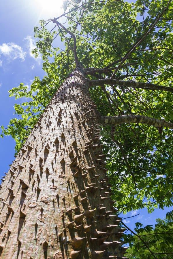 棘手的树干 免版税库存图片