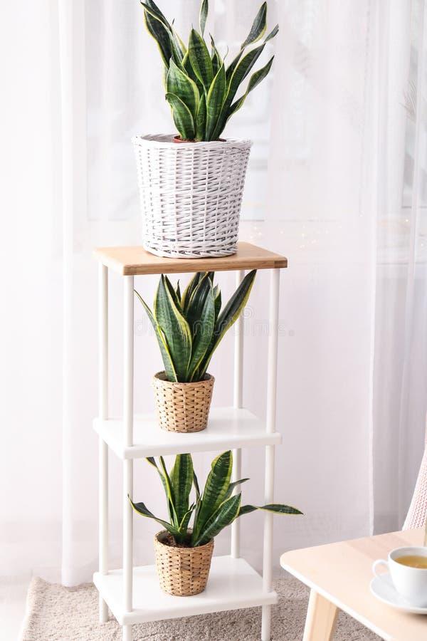 棚架的装饰百合科植物植物在屋子里 库存照片